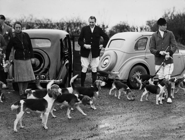 Well-to-do fox hunters standing beside their cars with a pack of Royal Rock Beagles at a Meet at Storeton, Merseyside, England. Date: 1950s