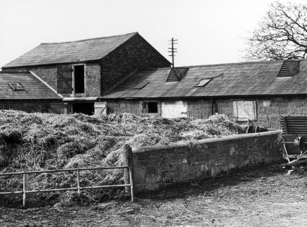 'Farmer's Gold' - a muck heap on a farm in Cheshire, England, proving that 'where there's muck, there's brass'! Date: 1960s