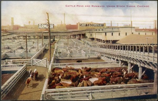 Cattle awaiting slaughter in the Union Stock Yards, Chicago - note the boards for Armour and Swift