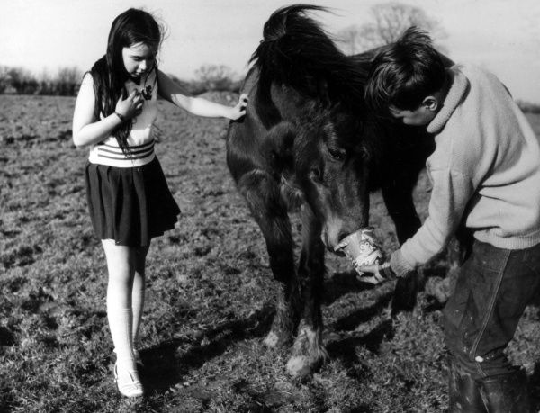 A little girl and boy feeding a pony. Date: 1960s