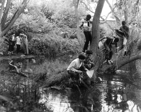 Children catching things in a pond during a biology lesson Date: 1950s