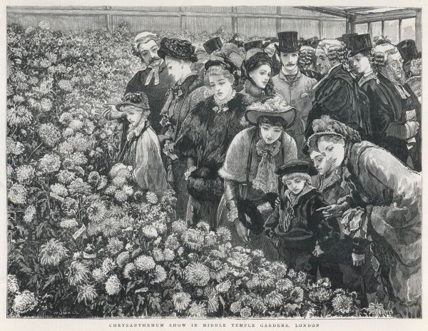Lawyers and smartly dressed families admire a flower display at the chrysanthemum show in Middle Temple Gardens, London