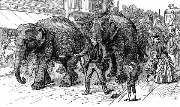 Engraving showing the arrival of some circus elephants at an English country town, c.1886. Onlookers gather to watch the visiting circus, with all its unusual animals, arrive in town