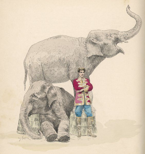 Circus elephants and their trainer