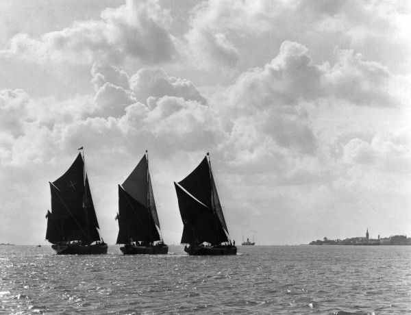 The coastal sailing barges 'Marjorie', 'Millie' and 'Saltcote Belle', on the River Stour Estuary, near Harwich, Essex, England. Date: 1950s