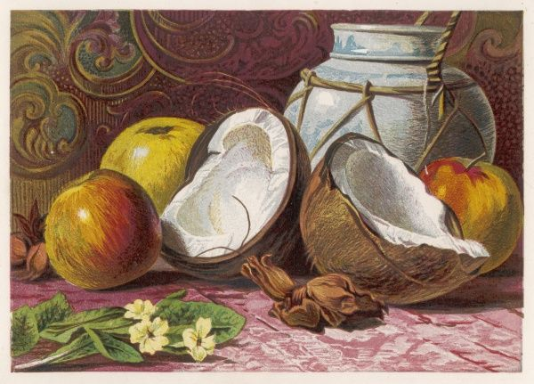 A still life showing a coconut - split in half and some apples