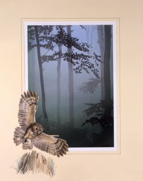 Pale light pierces a blue and green woodland scene of thin, bare tree trunks. A swooping Tawny Owl has been added to the border framing the scene. Airbrush painting by Malcolm Greensmith