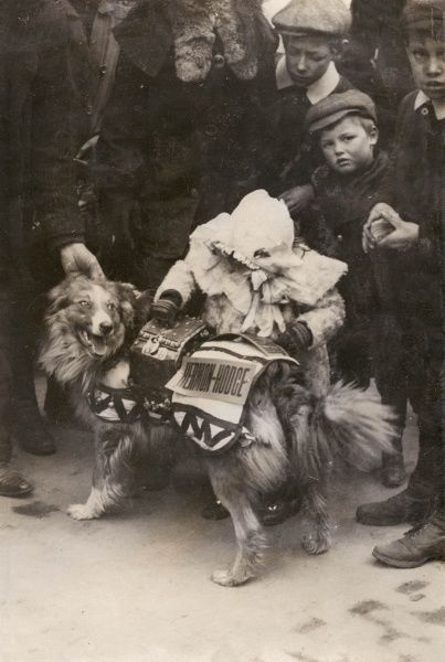 A biddable dog collects money for charity surrounding by a group of little boys in Croydon during the elections of 1909. He is a supporter of Robert Hermon Hodge, MP for Parliament