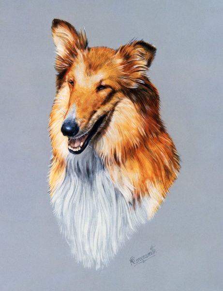 A portrait painting of a collie dog by Malcolm Greensmith