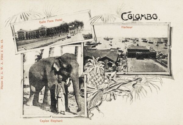 Scenes from Colombo, Sri Lanka, including an elephant, the Harbour and the Galle Face Hotel