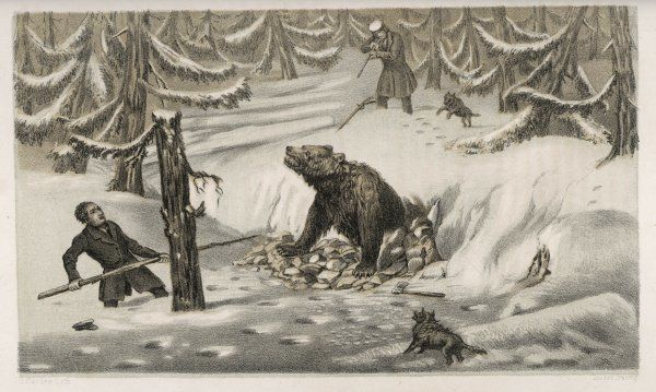 Cornering a bear, Sweden
