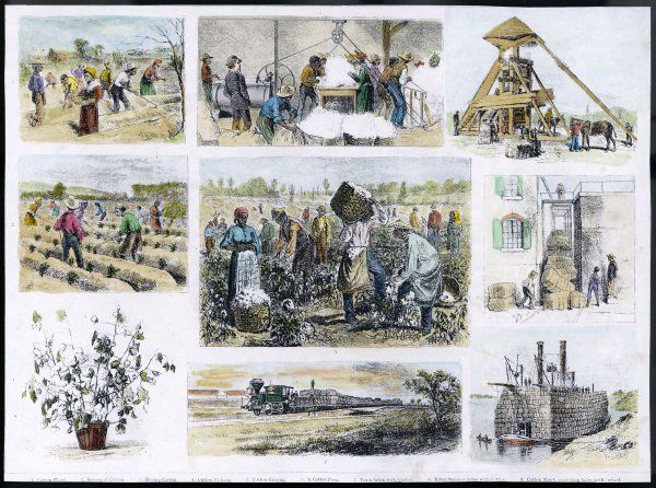 Various stages of cotton processing