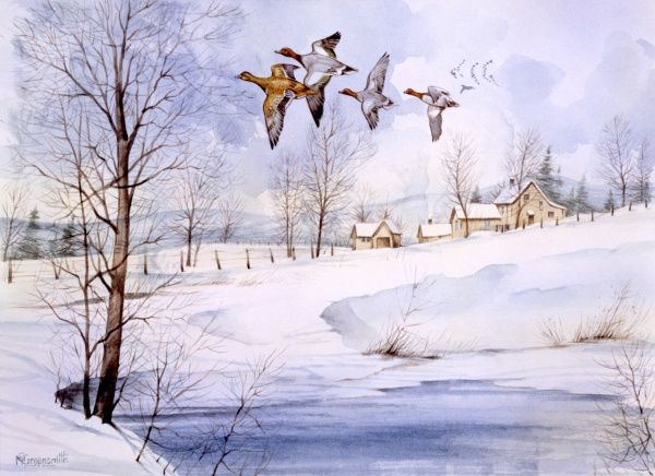 A snow-covered country landscape in winter with four flying ducks