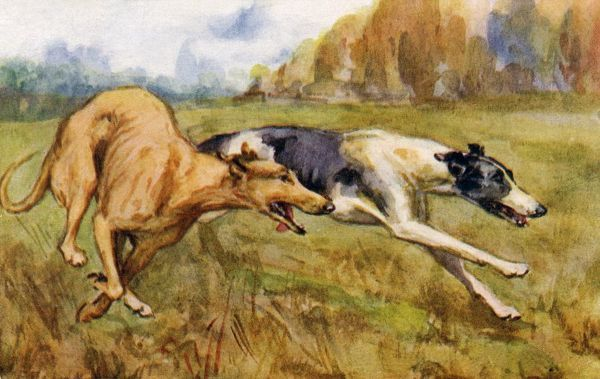 Coursing greyhounds. Artist: Eileen Hood. Watercolour of greyhound dogs racing through the countryside Date: circa 1922