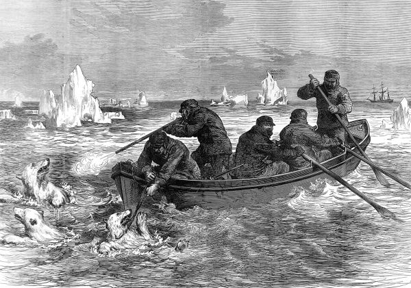 Engraving showing the crew of the Arctic exploration ship, 'Pandora', using one of the ship's boats to capture a young Polar bear in Arctic waters, 1875
