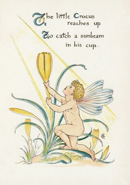 The little Crocus reaches up, to catch a sunbeam in his cup
