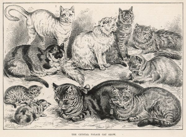 Engraving showing a number of the feline entrants in the Crystal Palace Cat Show of 1887