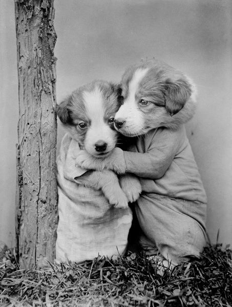 Two cute puppies dressed as humans, cuddling up together. Date: early 1930s