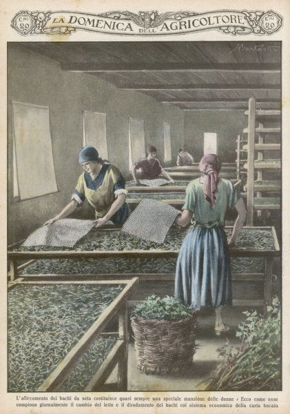 The cultivation of silk worms in Italy
