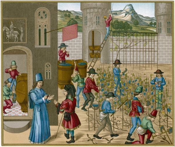 The cultivation of wine at a medieval French chateau