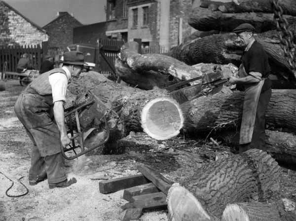 Two men operating a huge industrial chainsaw to cut equally huge felled tree trunks into logs. Date: 1950s