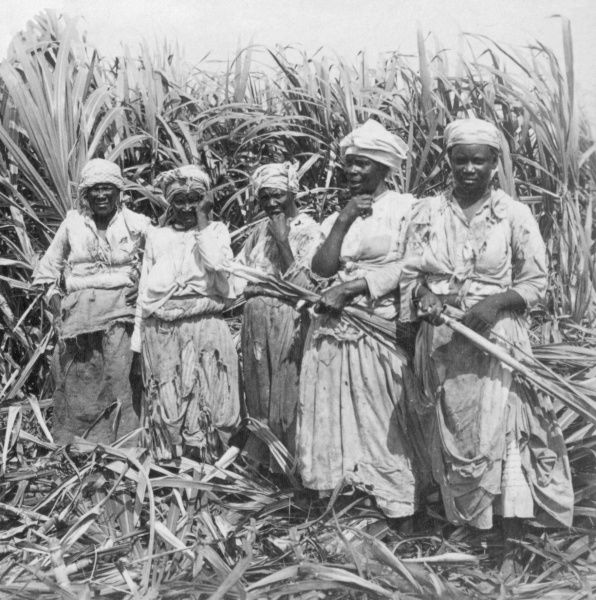 Workers cutting sugar cane at Montego, Jamaica