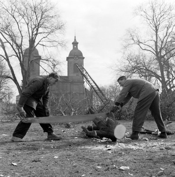 Trees are felled in front of Sofia Albertina Church, 1960. Date: 1960