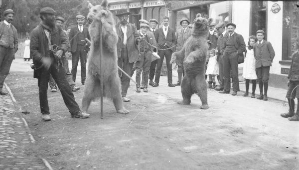 Two dancing bears and their owners, and several interested spectators, in the High Street, Crickhowell, Powys, Mid Wales