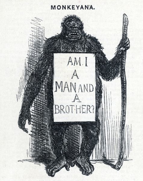 his theory is satirised - 'Am I a man and a brother ' Date: 1861 Source: unnamed artist in Punch 8 May 1861 page 206
