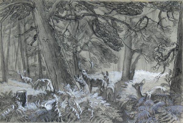 Deer in the forest. Pastel drawing by Raymond Sheppard