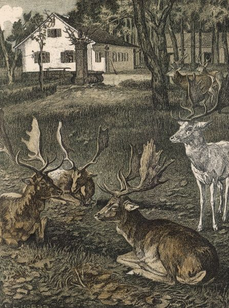 A herd of deer in a park including a white deer