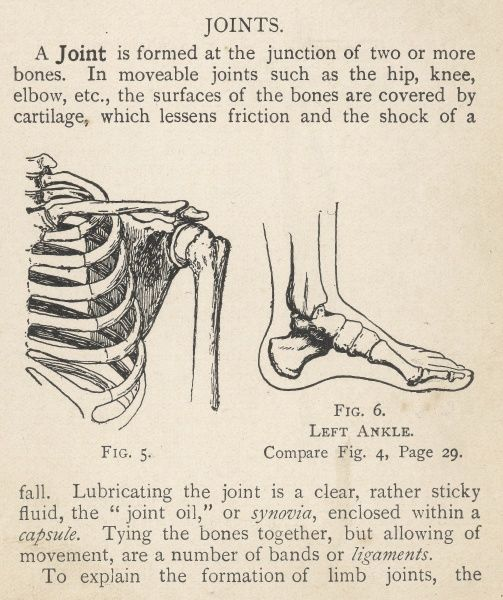 Diagrams of the human shoulder and ankle joints