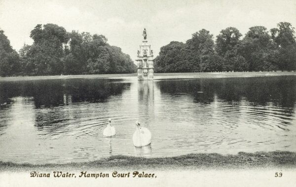 Two swans enjoying the still waters of Diana Water at Hampton Court Palace Date: 1924