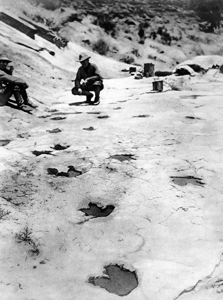 Petrified dinosaur footprints, cleared of lime deposits and full of water, in the snow capped hills of Arizona, a discovery made by Mr C. L Bernheimer. There are thirty imprints, apparently made by four different animals