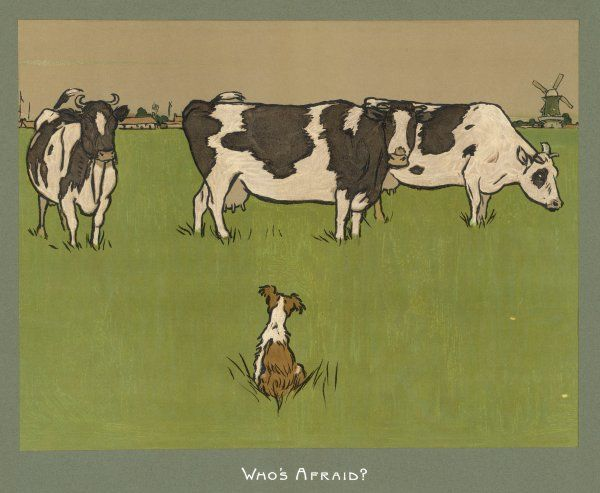 'Who's Afraid': a perky little dog keeps an eye on three cows, who seem more interested in chewing grass than bothering about him