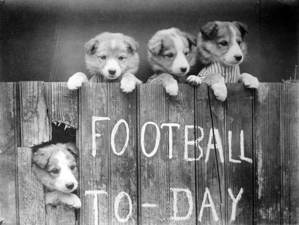 Puppy baseball fans peeping over a fence. Date: early 1930s