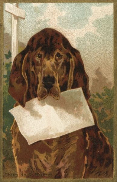A bloodhound invites you to write your own message on this greeting card
