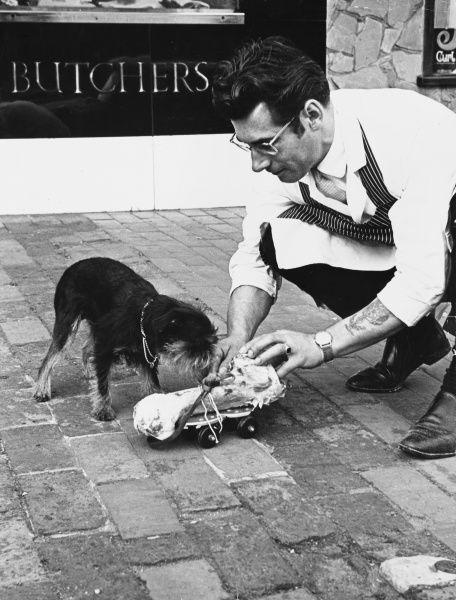 A butcher gives a dog a bone, only it's on a roller skate. How does that work? Date: 1960s