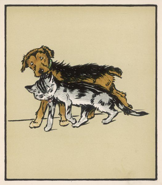 A dog pulls a cat along by the scruff of its neck