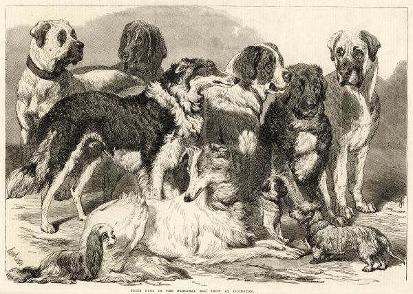 A group of prize-winning dogs at the National Dog Show, held in the Agricultural Hall, Islington, London