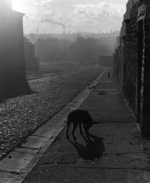 A dog in a Liverpool street. Date: 1960