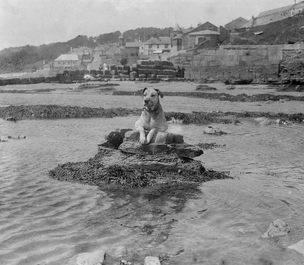 'The King of the Castle', a dog stranded at sea! Date: early 1930s