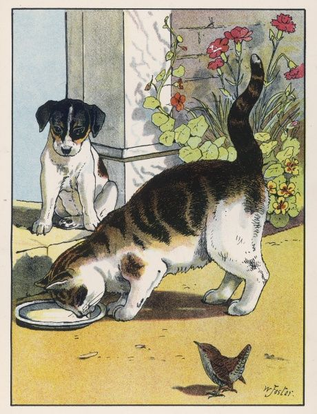 A cat drinks a saucer of milk at a doorstep whilst watched by a dog