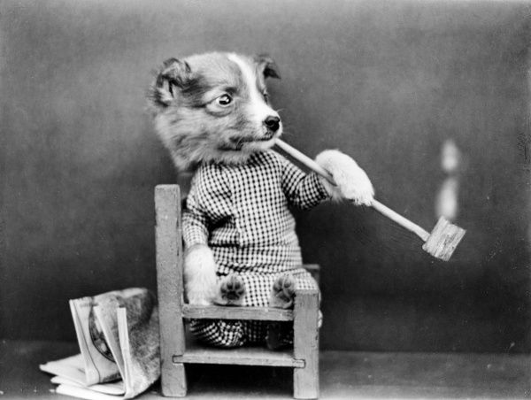 A puppy smoking a very long pipe! Date: early 1930s