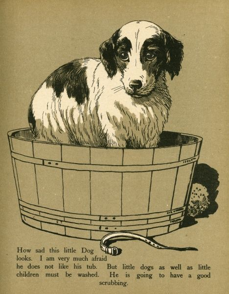 A little dog stands miserably in a tub waiting to be washed.  circa 1912