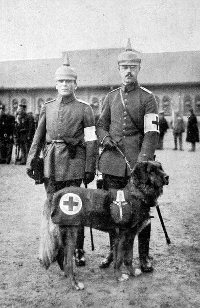 A Canine member of the German Red Cross, seen with two orderlies, equipped for field service with a flask, cup and first-aid case. Dogs were used frequently, particularly by the Germans, during World War I, as auxiliaries in ambulance work