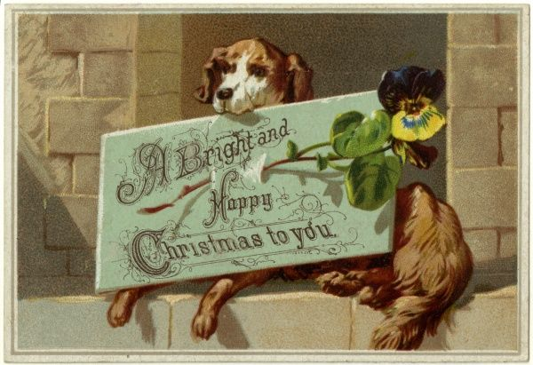 A dog lies holding a card wishing people a bright and happy Christmas, a flower is pinned to the card for decoration