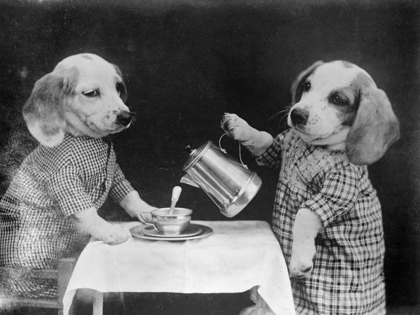 One clever dog pours the other one a cup of coffee from a stylish metal coffee pot! Date: early 1930s