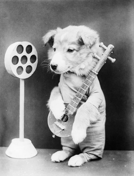 A doggy rock star strums a tune into a large microphone. Date: early 1930s
