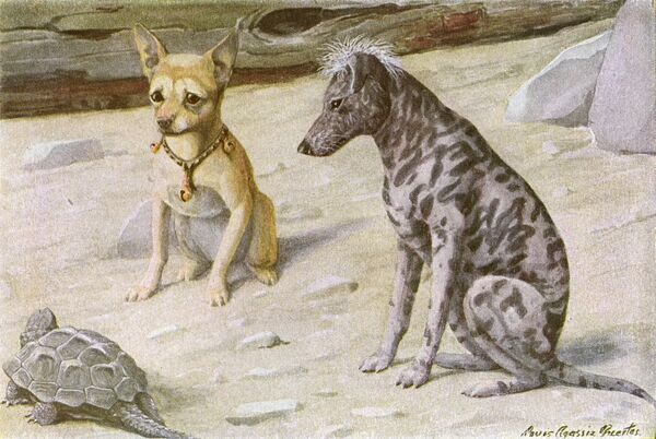 Two dogs and a turtle. A Chihuahua and a Mexican hairless dog look at a passing turtle inquisitively Date: 20th century